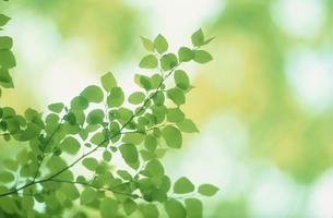 新緑の写真素材 [FYI03233843]