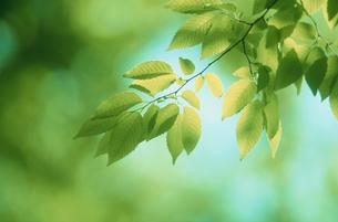 葉のアップの写真素材 [FYI03233846]