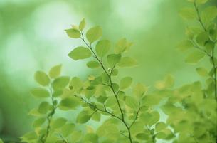 新緑の写真素材 [FYI03233853]