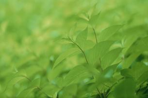 葉のイメージの写真素材 [FYI03233875]