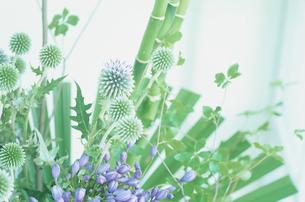 グリーンの植物の写真素材 [FYI03233878]