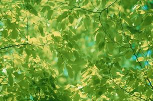 新緑の写真素材 [FYI03233882]