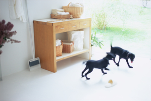 ランドリールームの2匹の黒い子犬の写真素材 [FYI03234166]