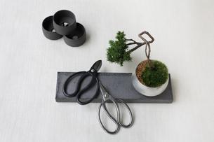 盆栽と剪定バサミと鉢の写真素材 [FYI03234234]
