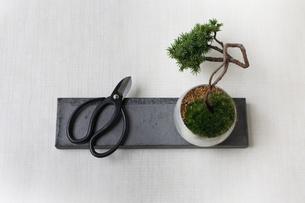 盆栽と剪定バサミの写真素材 [FYI03234235]