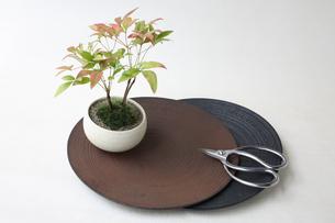 盆栽と剪定バサミの写真素材 [FYI03234241]