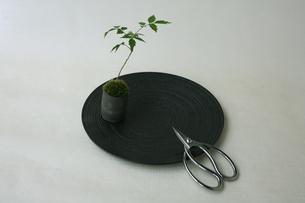盆栽と剪定バサミの写真素材 [FYI03234244]