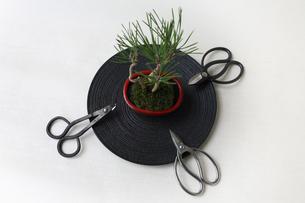 盆栽と剪定バサミの写真素材 [FYI03234245]