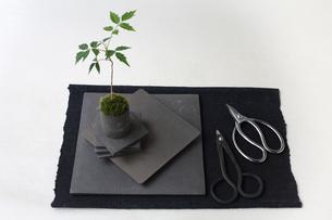 盆栽と剪定バサミの写真素材 [FYI03234248]