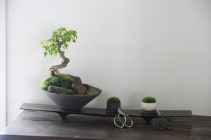 盆栽とコケと剪定バサミの写真素材 [FYI03234254]