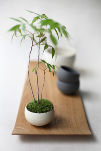 盆栽と鉢の写真素材 [FYI03234269]