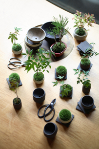 テーブルの上の盆栽と剪定バサミの写真素材 [FYI03234278]