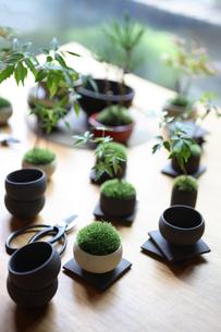 テーブルの上の盆栽と剪定バサミの写真素材 [FYI03234279]