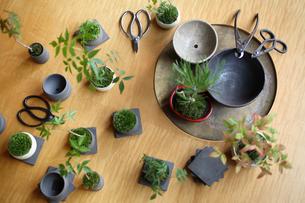 テーブルの上の盆栽と剪定バサミの写真素材 [FYI03234284]