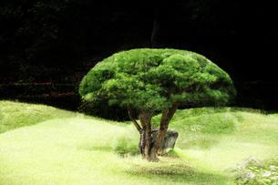 庭園イメージの写真素材 [FYI03234285]