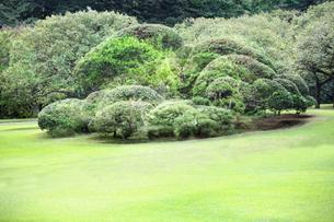 庭園イメージの写真素材 [FYI03234286]