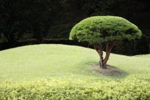 庭園イメージの写真素材 [FYI03234288]