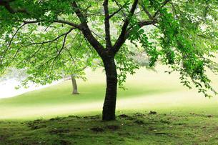 庭園イメージの写真素材 [FYI03234290]
