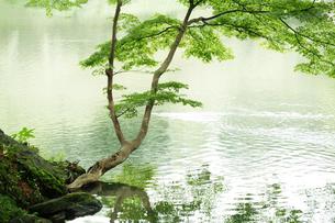 庭園イメージの写真素材 [FYI03234293]