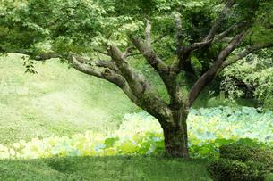 庭園イメージの写真素材 [FYI03234294]