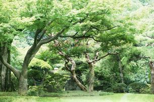 庭園イメージの写真素材 [FYI03234296]