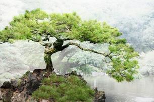 庭園イメージの写真素材 [FYI03234298]