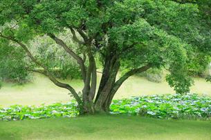 庭園イメージの写真素材 [FYI03234312]