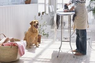 アイロンをかける女性と犬の写真素材 [FYI03235032]
