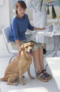 カフェで女性の足元に座る犬の写真素材 [FYI03235054]