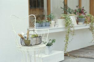 窓辺に置かれた観葉植物の鉢植えやスコップの写真素材 [FYI03235294]