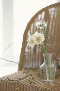 籐の椅子の上のガラス花瓶に生けたスカビオサの写真素材 [FYI03235337]