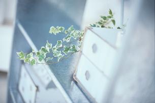 スチールのキャビネットと観葉植物の写真素材 [FYI03235627]
