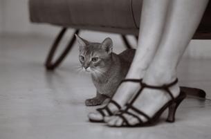 サンダルの女性の足元にアビシニアンの写真素材 [FYI03235629]
