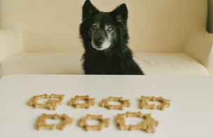 ドックフードで作ったGOODDOGの文字黒い犬の写真素材 [FYI03235630]