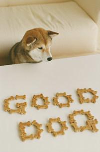 ドッグフードで作ったGOODDOGの文字と柴犬の写真素材 [FYI03235639]