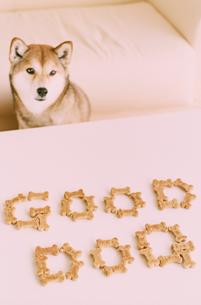 ドックフードで作った文字と柴犬の写真素材 [FYI03235645]
