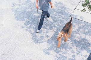 道を歩く女性とワイアーフォックステリアの写真素材 [FYI03235650]