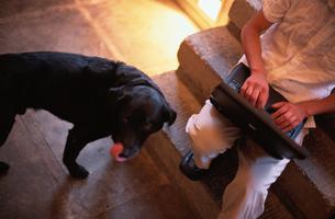 階段でパソコンを打つ男性と犬の写真素材 [FYI03235672]