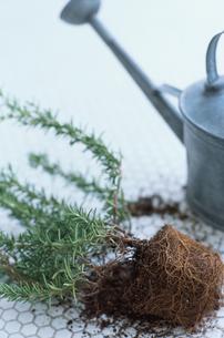 土のついた観葉植物とじょうろの写真素材 [FYI03235756]