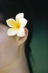 プルメリアを髪に飾る女性の写真素材 [FYI03236075]