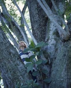 木と男の子の写真素材 [FYI03236131]