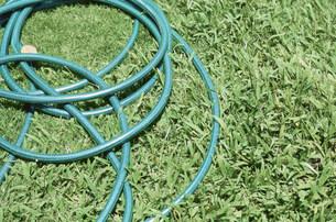 芝生の上のホースの写真素材 [FYI03236194]