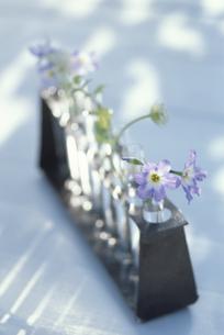 花器に入った花の写真素材 [FYI03236211]