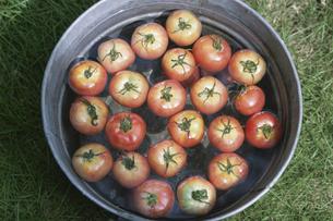 トマトの写真素材 [FYI03236461]