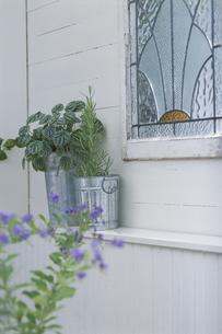 窓辺を飾る植物の写真素材 [FYI03236543]