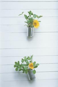 壁を飾るヒマワリとイチゴの葉の写真素材 [FYI03236551]