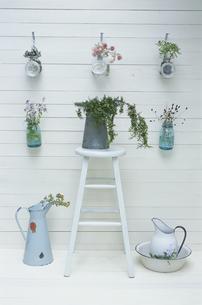 壁を飾る花とイスに置かれた植物の写真素材 [FYI03236554]