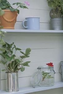 棚に飾られた花や鉢植えの写真素材 [FYI03236569]