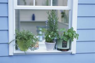 窓辺を飾るハーブの鉢植えの写真素材 [FYI03236591]