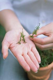 手のひらの上に植物の写真素材 [FYI03236603]
